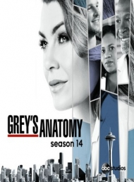 grey's anatomy saison 14.jpg