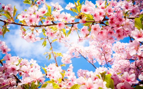 printemps.jpeg