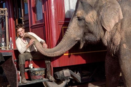 De l'eau pour les éléphants Tai.jpg