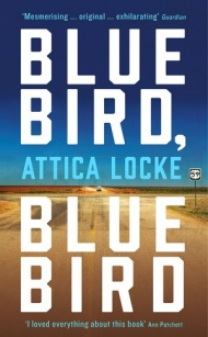 bluebird-bluebird-1362495.jpg