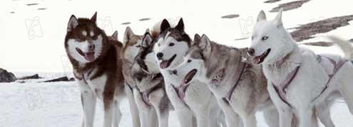Antartica, prisonnier du froid les chiens.jpg